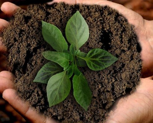 Nachhaltigkeit in Unternehmen ist nicht nur ein wichtiger Trend, sondern bestimmt auch die Zukunft